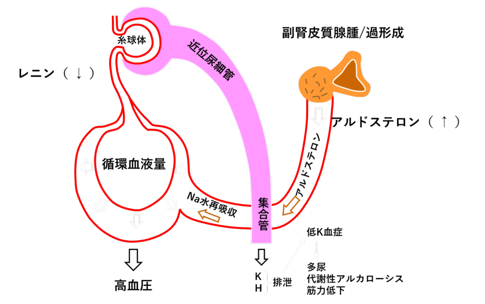 親和 性 細胞 クロム